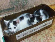 отдам в добрые руки отдам двух веселых котят - мальчика и девочку, Ангарск - Отдам даром