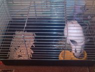 декоративный кролик с клеткой Кролик белого цвета. возраст 9 месяцев. продаю вместе с клеткой., Арзамас - Другие животные
