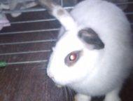 Арзамас: декоративный кролик с клеткой Кролик белого цвета. возраст 9 месяцев. продаю вместе с клеткой.