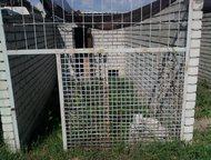 продаю лицевую часть для вольера Заводчикам собак и владельцам питомников, продаю лицевую часть для вольера,   изготовлен из железных уголков и железн, Дзержинск - Услуги для животных