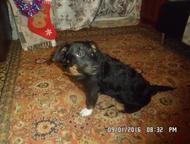 отдам собаку Отдам собаку в добрые руки. Очень умный и ласковый пёсик, был найден в январе, но хозяева не откликнулись. Очень воспитан, в туалет ходит, Екатеринбург - Отдам даром! Приму в дар!