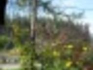 Гатчина: Продам 1ком-ю кв-у в деревян, доме или обменяю, 50км, от С, П, -Б Продам 1ком-ю кв-у в деревян. доме или обменяю, 50км. от С. П. -Б, Лен-я обл-ь, Гатч