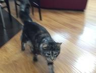 пропал кот куплю своего кота, ушел в ночь на 8 апреля, район Татарбазара, домашний, 2 года, не кастрирован, небольшой шрамик под глазом, есть вредные , Ижевск - Потерянные