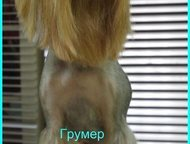 Москва: Зоосалон Коготки Профессиональная стрижка собак и кошек, тримминг, подготовка к выставкам. Наши мастера подстригут и помоют ваших животных. Приходите