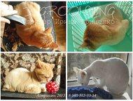 Астрахань: Стрижка собак и кошек в Астрахани, опытный грумер Стрижки породные и модельные, практичные домашние и гигиенические. Мытьё, расчёсывание, стрижка когт