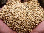 Москва: Продажа комбикорма Нижний Новгород Продажа комбикорма, зерна, отрубей, ракушки, жмых, цены низкие