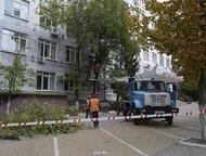 Удаление опасных/аварийных деревьев Оказываем полный комплекс услуг по вырубке и спилу деревьев в Омске и Омской области.   Работаем со сложными и опа, Омск - Разные услуги