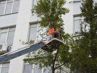 Омск: Удаление опасных/аварийных деревьев Оказываем полный комплекс услуг по вырубке и спилу деревьев в Омске и Омской области.   Работаем со сложными и опа