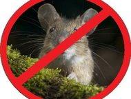Избавим от крыс и мышей Уничтожение всех видов насекомых и грызунов. Обработку производим импортными препаратами. Работаем по всей Самарской области б, Самара - Разное